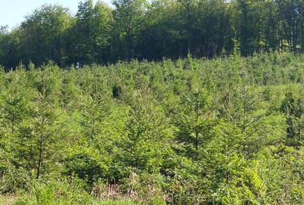 Pourquoi planter des arbres ?